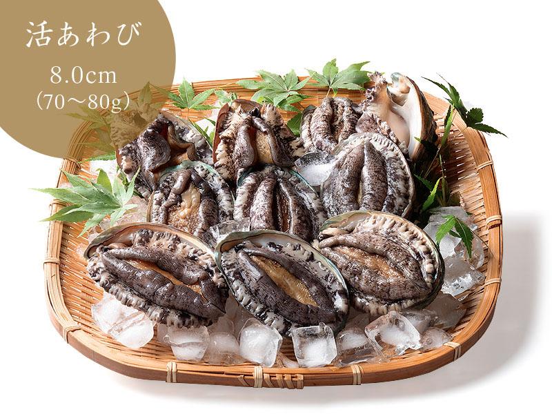活あわび(8cmサイズ 1個)